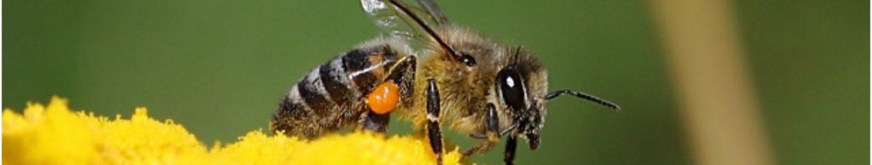 """""""Les délices d'Is-abeille """" – 43160 LA CHAISE-DIEU – Auvergne"""